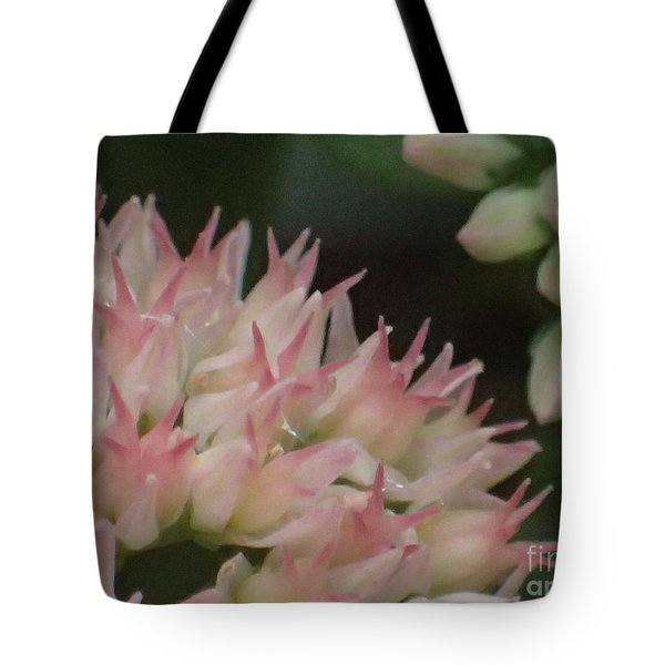 Sweet Dreams Tote Bag by Christina Verdgeline