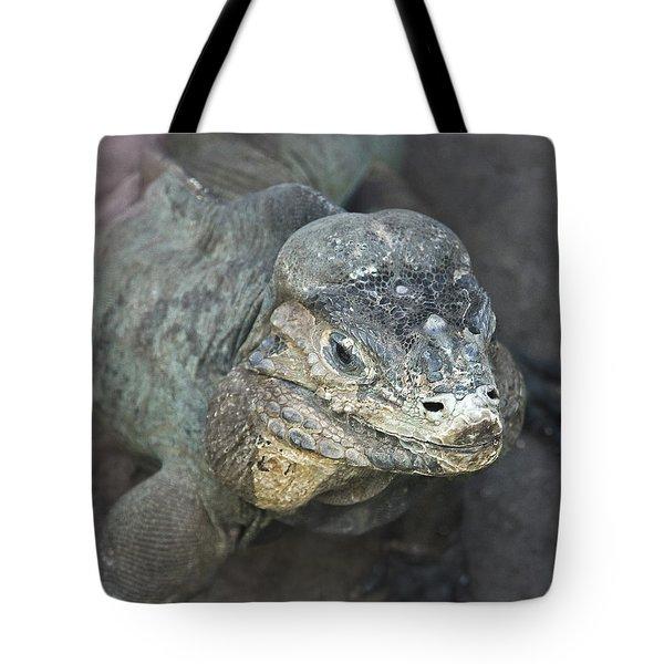 Tote Bag featuring the photograph Sweet Face Of Rhinoceros Iguana by Miroslava Jurcik