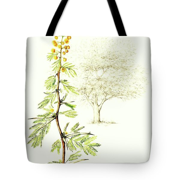 Tote Bag featuring the painting Sweet Thorn Botanical Illustration by Heidi Kriel