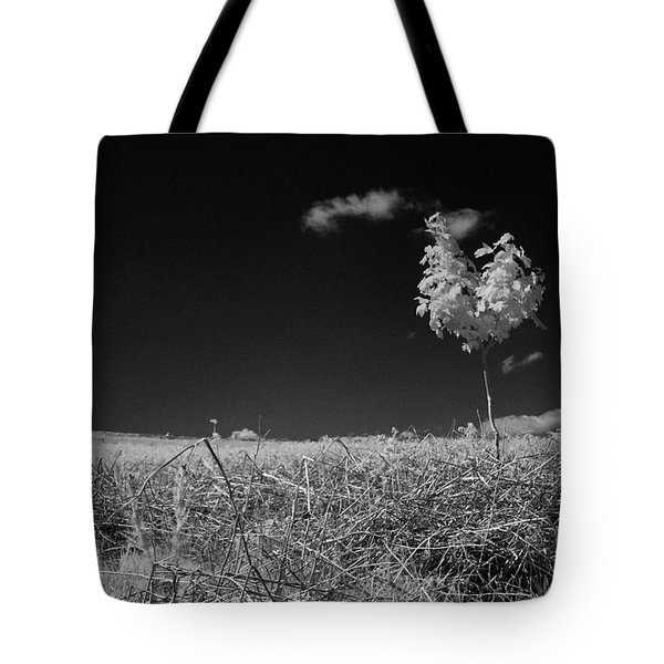 Sycamore Tote Bag by Keith Elliott