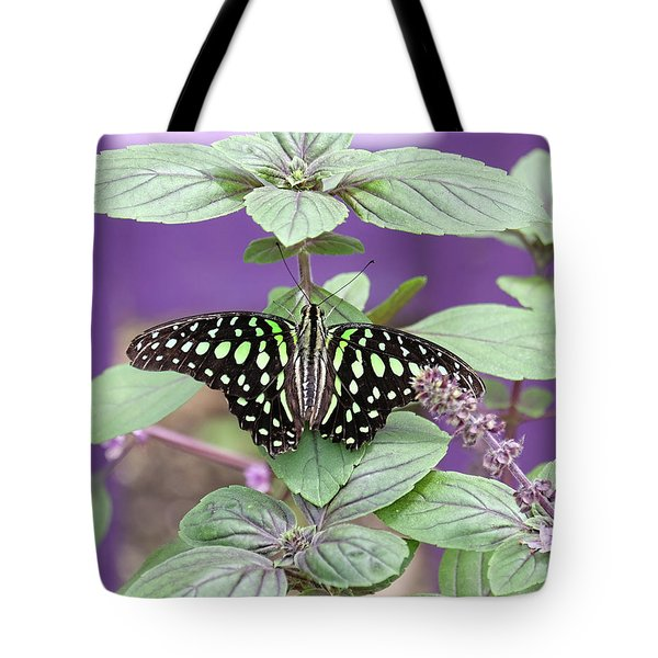 Tailed Jay Butterfly In Puple Tote Bag