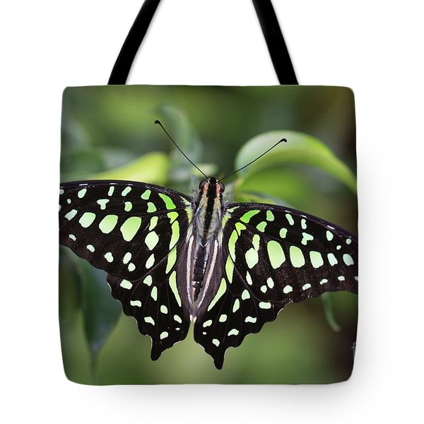 Tailed Jay Tote Bag