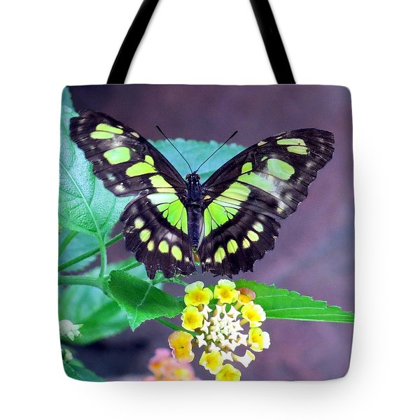 Tailed Jay Visits Lantana Tote Bag