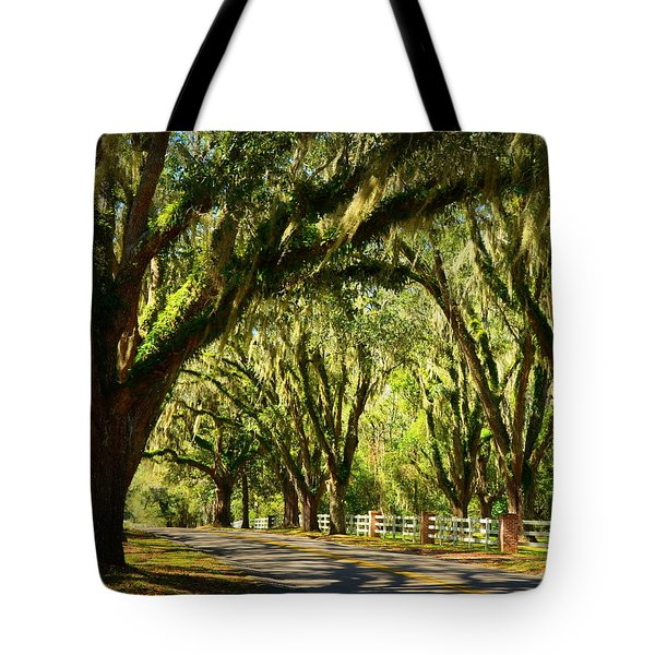 Tallahassee Canopy Road Tote Bag