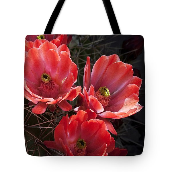 Tangerine Cactus Flower Tote Bag by Phyllis Denton