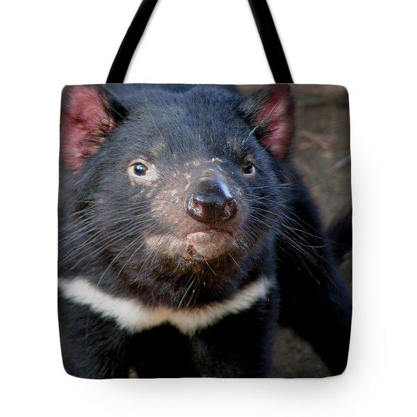 Tasmanian Devil Tote Bag by Greg Slocum