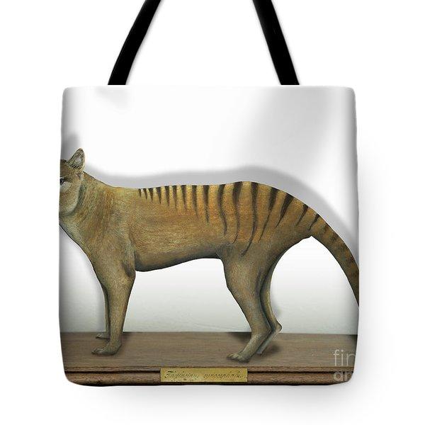 Tasmanian Tiger-thylacinus Cynocephalus-tasmanian Wolf-lobo De Tasmania-tasmanian Loup-beutelwolf    Tote Bag