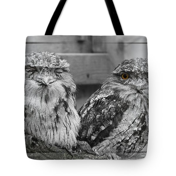 Tote Bag featuring the photograph Tawney Frogmouths by Chris Armytage
