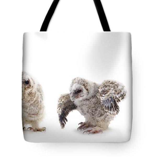 Tawny Owl Family Tote Bag