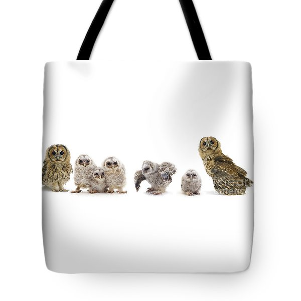 Tawny Owl Family Tote Bag