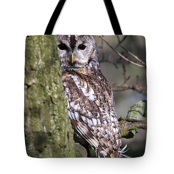 Tawny Owl In A Woodland Tote Bag
