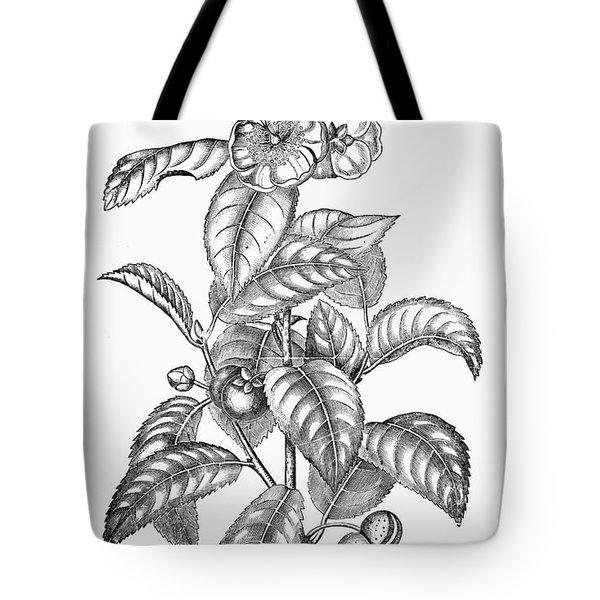 Tea Plant, 19th Century Tote Bag by Granger