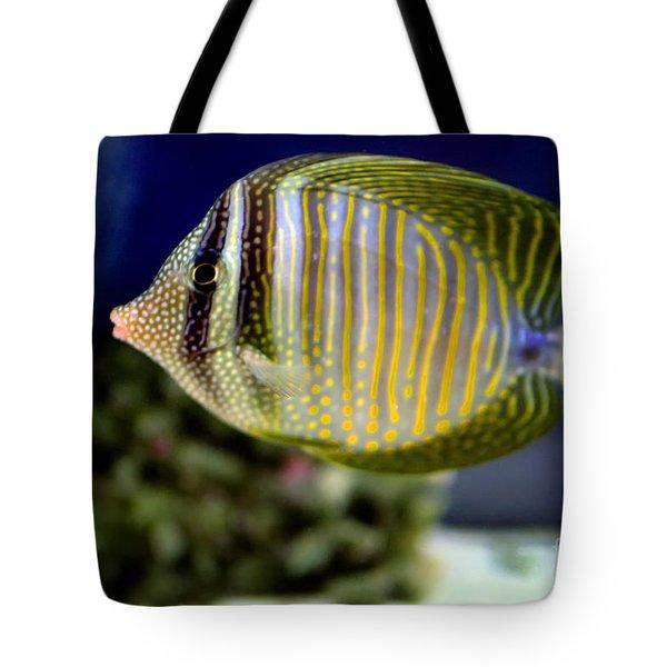 Technicolor Fish Tote Bag by Madeline Ellis