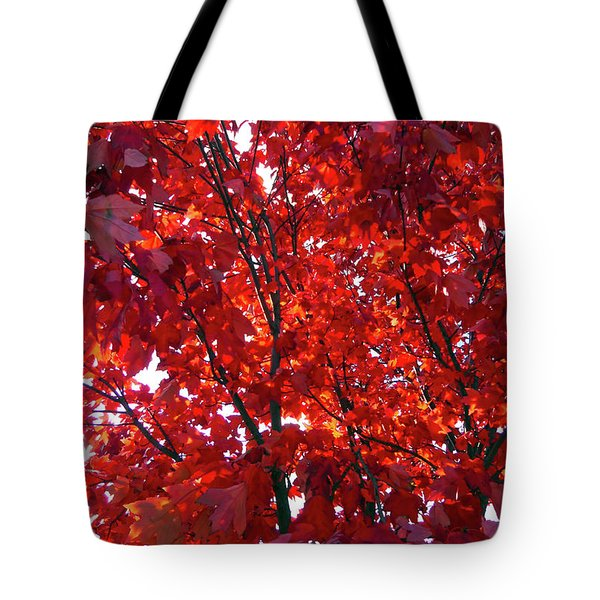 Tennessee Trees 3 Tote Bag by Jeanne Forsythe