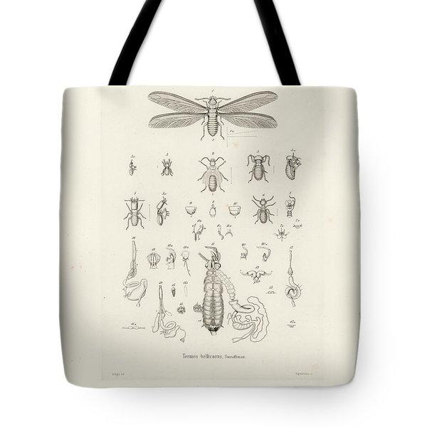 Termites, Macrotermes Bellicosus Tote Bag by H Hagen