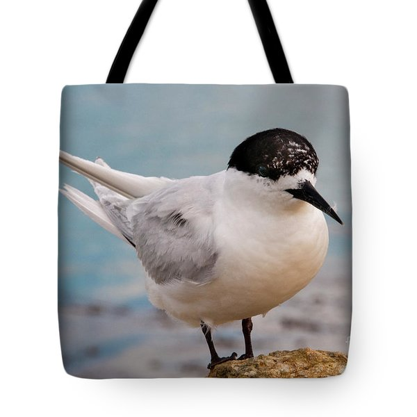 Tote Bag featuring the photograph Tern 1 by Werner Padarin