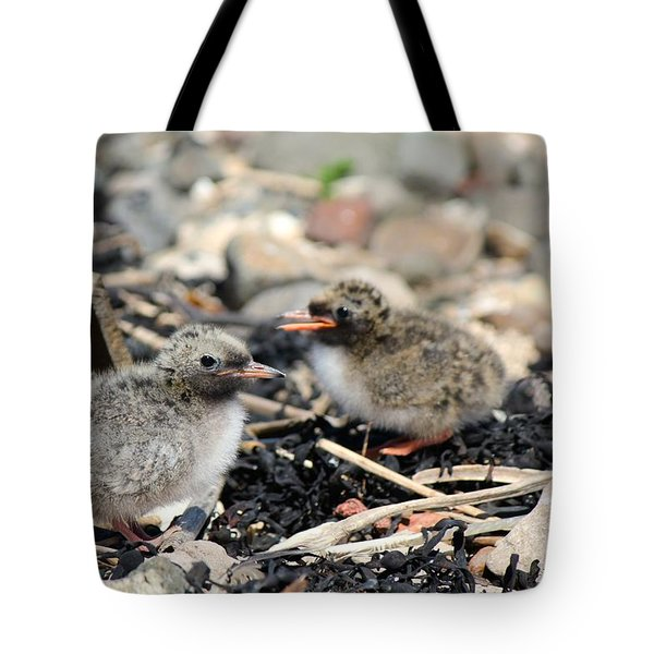 Tote Bag featuring the photograph Tern Chicks by David Grant