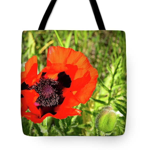 Tote Bag featuring the photograph Teton Poppy by Greg Norrell