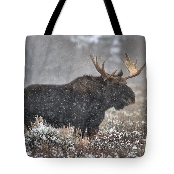 Tote Bag featuring the photograph Teton Snowy Moose by Adam Jewell