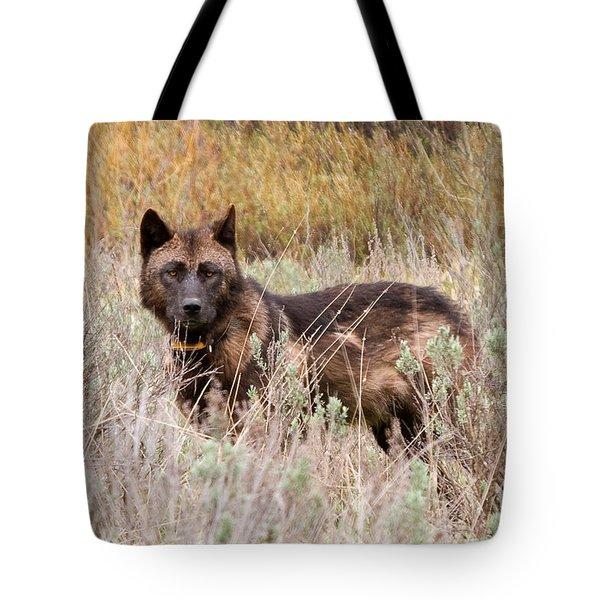 Teton Wolf Tote Bag by Steve Stuller