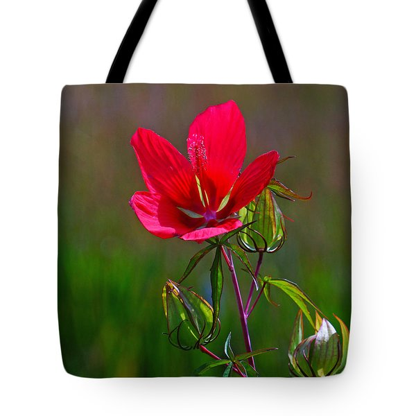 Texas Star Hibiscus Tote Bag