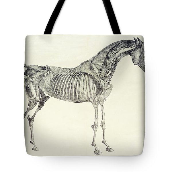 The Anatomy Of The Horse Tote Bag by George Stubbs