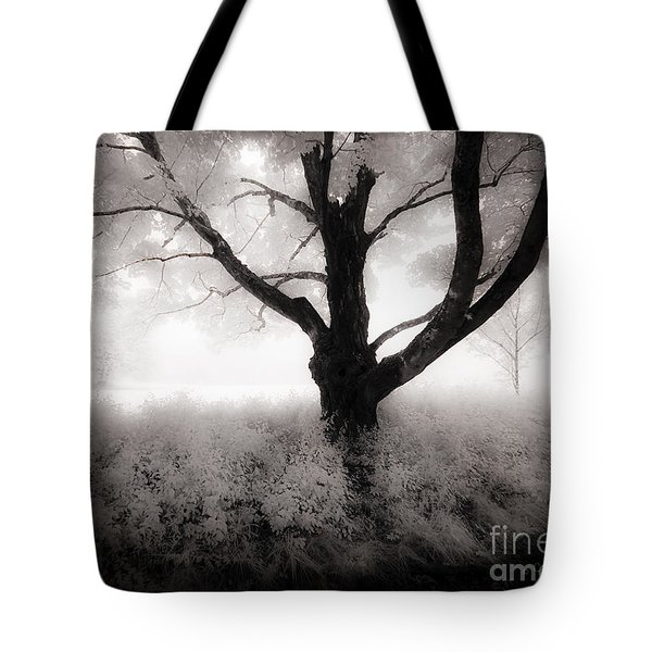 The Ancient Tree Tote Bag by Craig J Satterlee