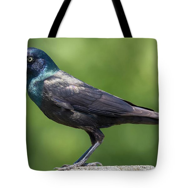 Tote Bag featuring the photograph The Beautiful Common Grackle by Ricky L Jones