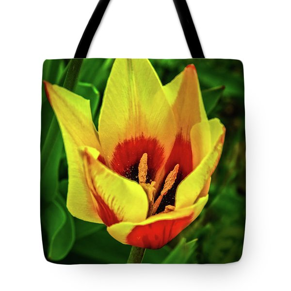 Tote Bag featuring the photograph The Bicolor Tulip by Robert Bales