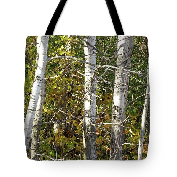 Tote Bag featuring the photograph The Birches by Kimberly Mackowski