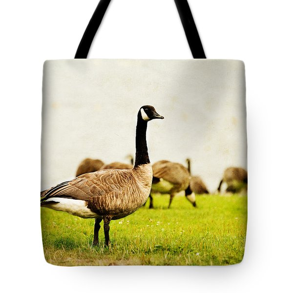 Tote Bag featuring the photograph The Black Canada Goose by MaryJane Armstrong