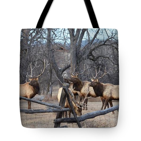 Tote Bag featuring the photograph The Boys by Billie Colson