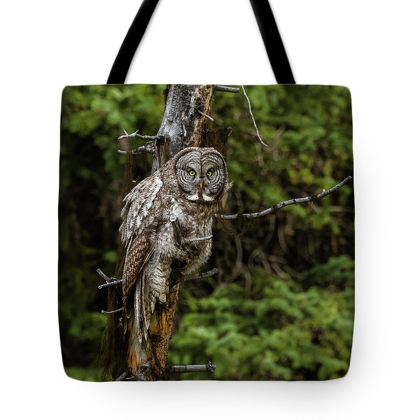 The Captivating Great Grey Owl Tote Bag