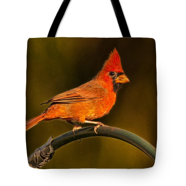 Tote Bag featuring the photograph The Cardinal by Don Durfee