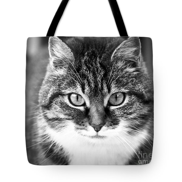 The Cat Stare Down Tote Bag