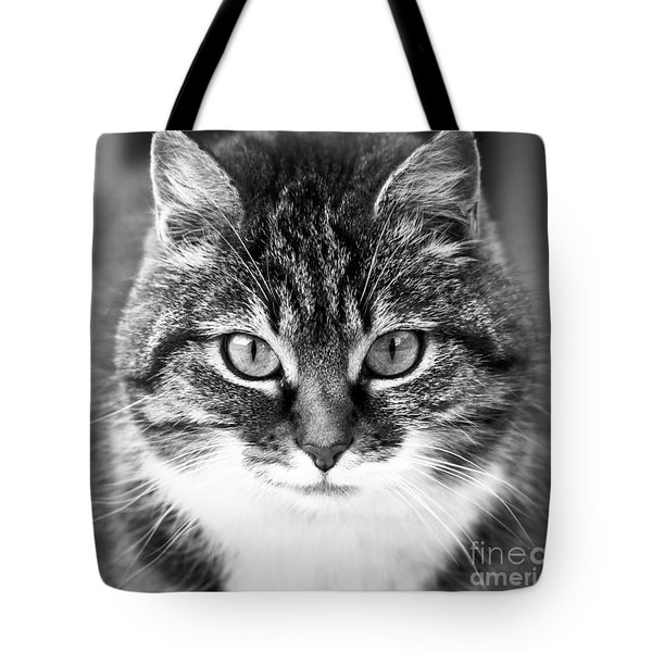 The Cat Stare Down Tote Bag