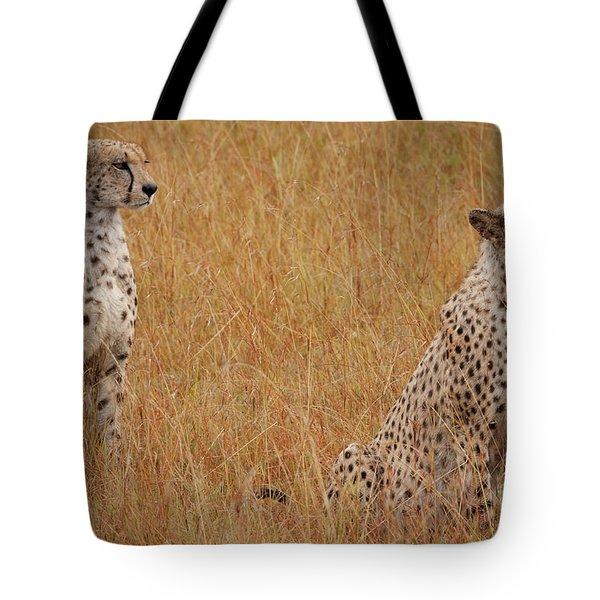 The Cheetahs Tote Bag by Nichola Denny