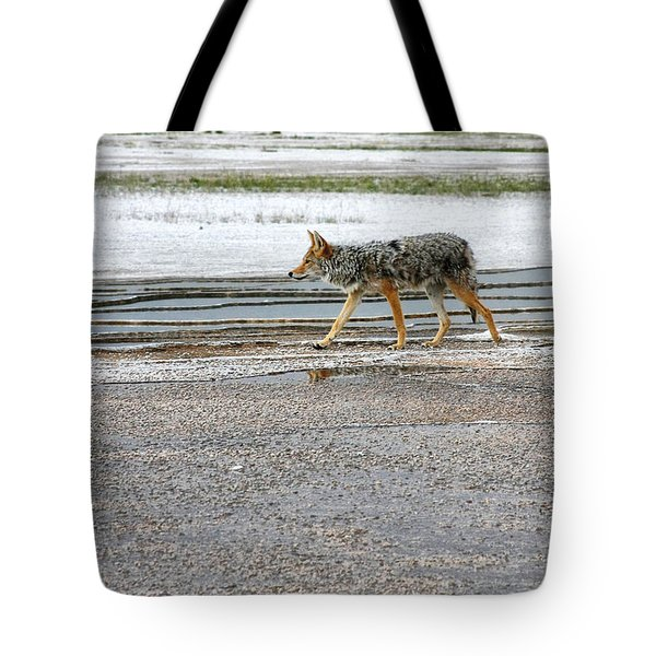The Coyote - Dogs Are By Far More Dangerous Tote Bag by Christine Till