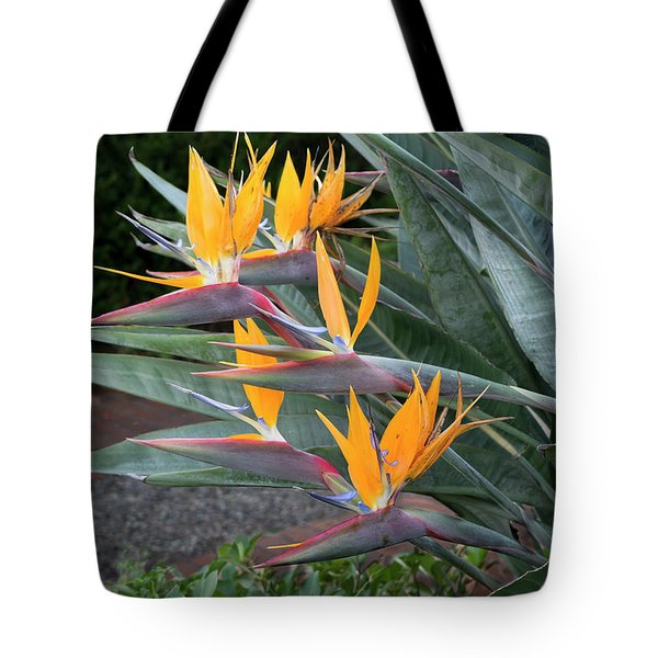 The Crane Flower - Bird Of Paradise  Tote Bag