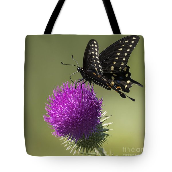 The Eastern Black Swallowtail  Tote Bag