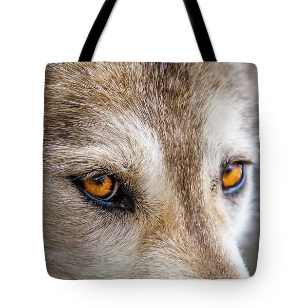 Tote Bag featuring the photograph The Eyes Of A Great Grey Wolf by Teri Virbickis