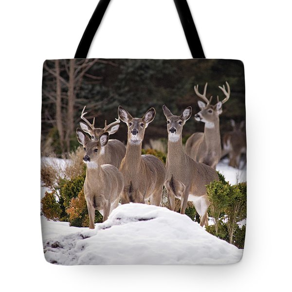 Tote Bag featuring the photograph The Family by Angel Cher