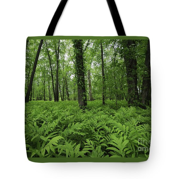 Tote Bag featuring the photograph The Forest Of Ferns by Mary Lou Chmura