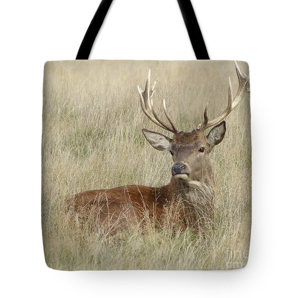The Gentle Stag Tote Bag