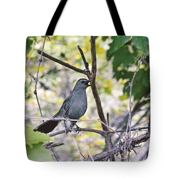 The Gray Catbird Meowing Tote Bag