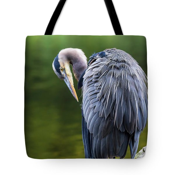 The Great Blue Heron Perched On A Tree Branch Preening Tote Bag by David Gn