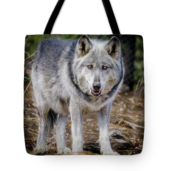 Tote Bag featuring the photograph The Great Gray Wolf by Teri Virbickis