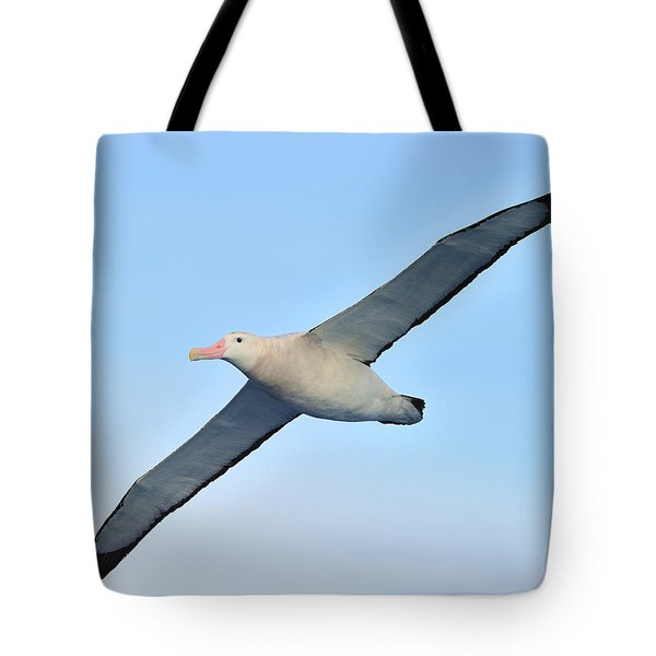 The Greatest Seabird Tote Bag by Tony Beck