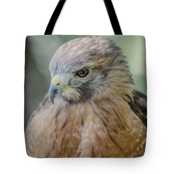 The Hawk Tote Bag by David Collins