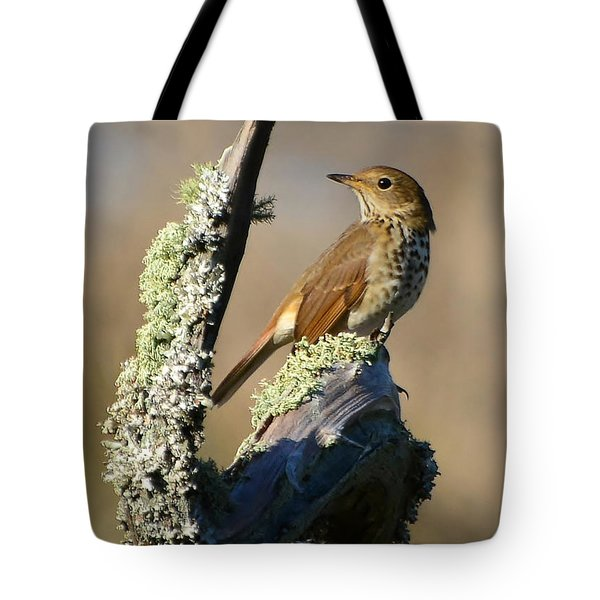 The Hermit Thrush Tote Bag
